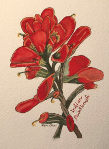 Indian paintbrush flower - Mixlings in Time